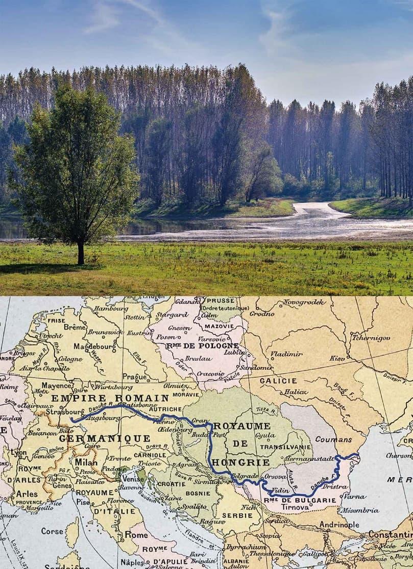 ドナオーク 長い年月をかけて未来を想い、育まれた森