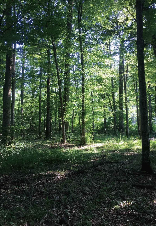 ドナオーク 森と共に生き、森を活かす健やかな森を保つ方法とは